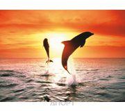 Фото Ravensburger Дельфины